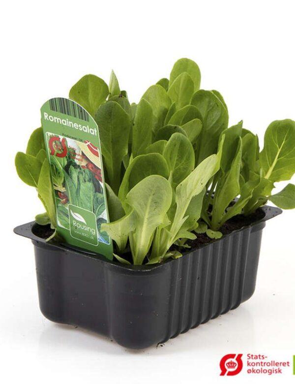 Romanine salat